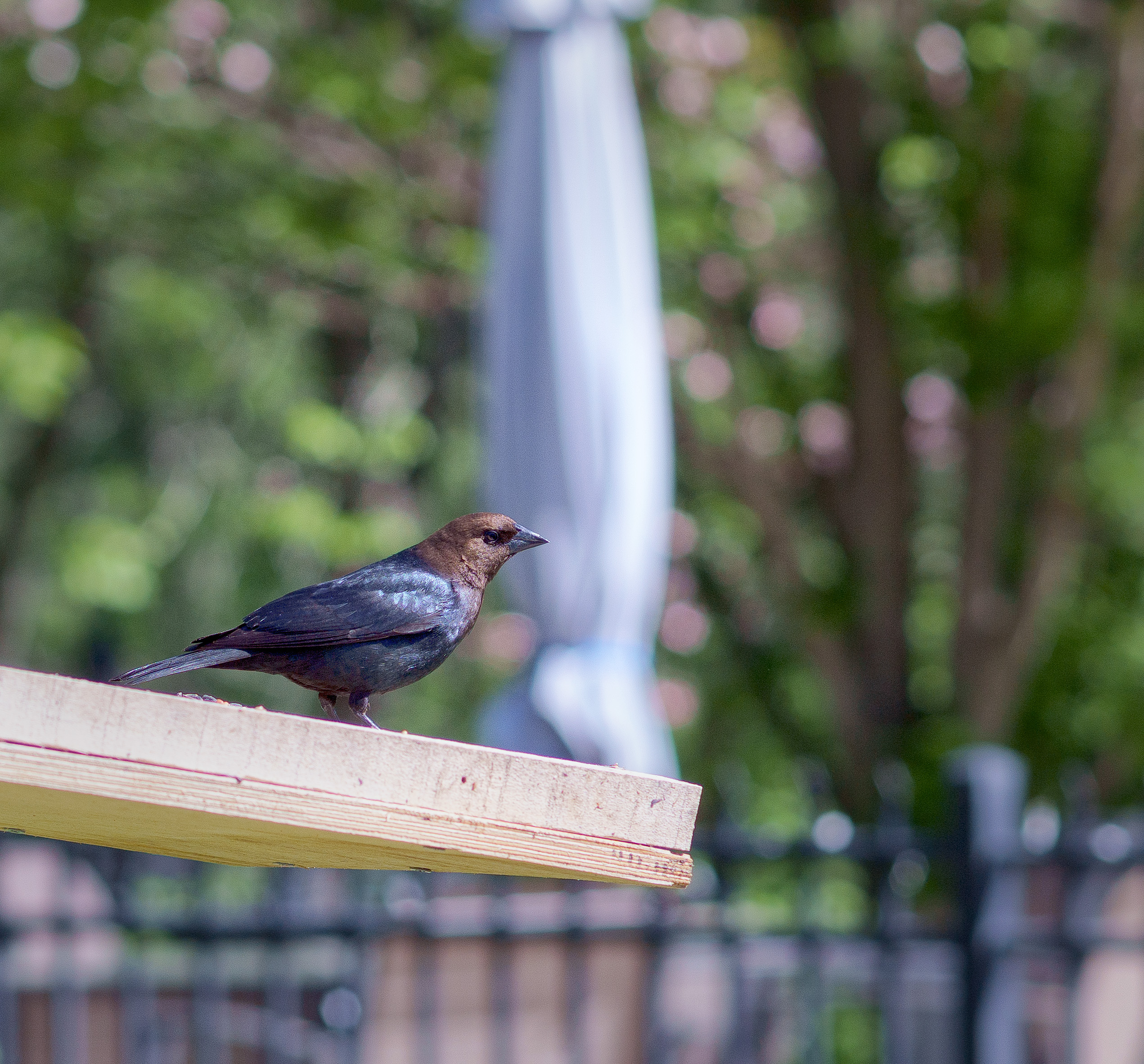 A black bird on a platform feeder