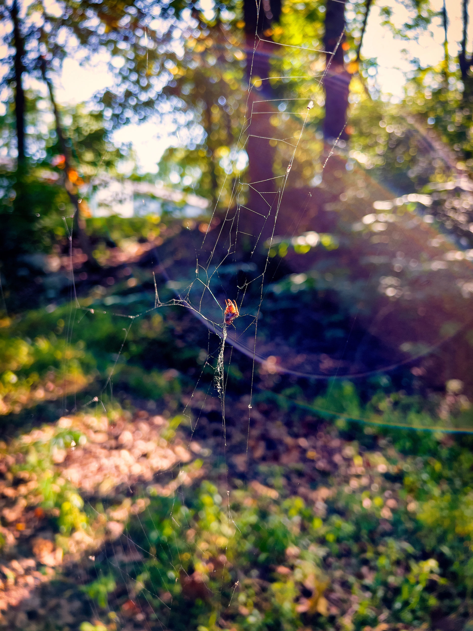 A spider on a web in the woods